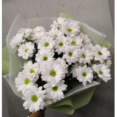 5 white chrysanthemums