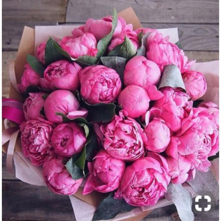 25 pink peonies