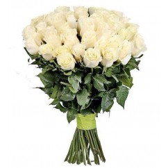 31 rose Mondial