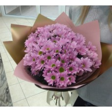 7 pink chrysanthemums per pack