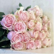 21 rose Pink Mondial