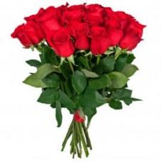 21 rose Freedom