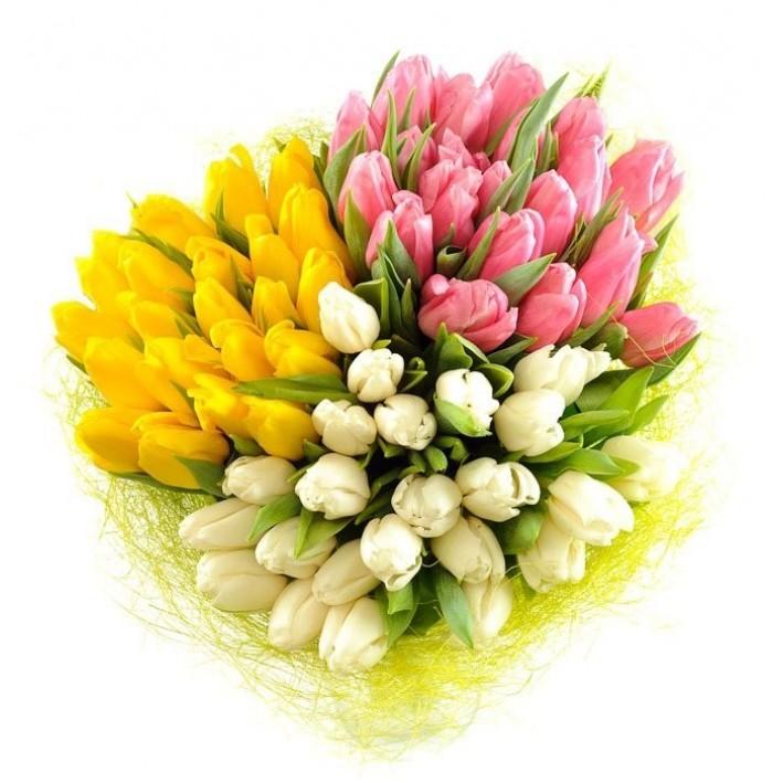 75 tulips in decoration