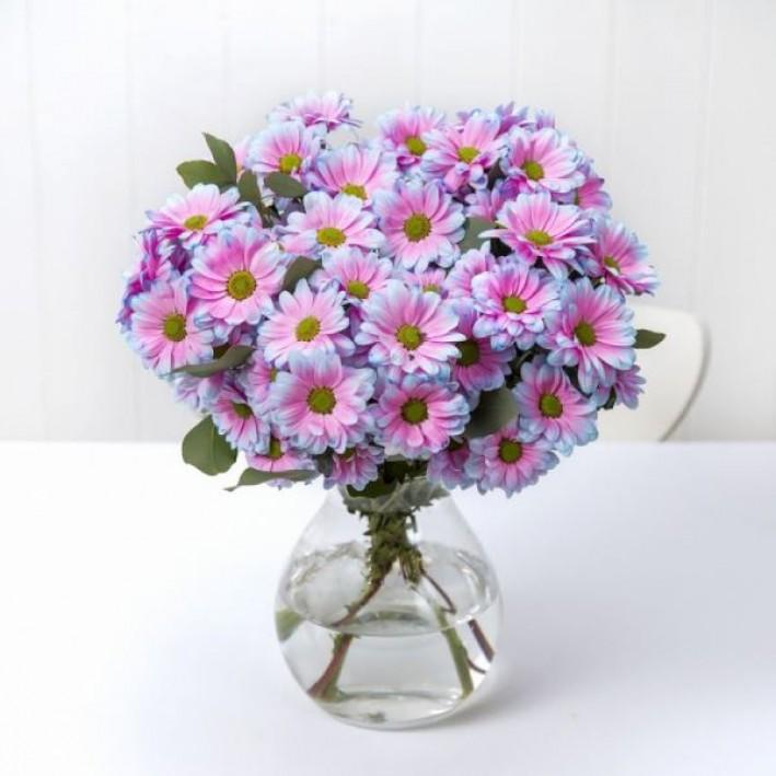 Chrysanthemum Bacardi Bubble Gum