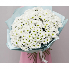 51 spray chrysanthemum