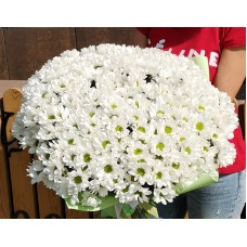 33 white chrysanthemums