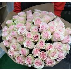 51 pale pink rose