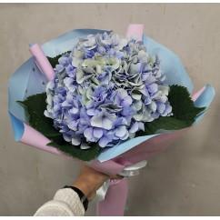 Bouquet of blue hydrangea