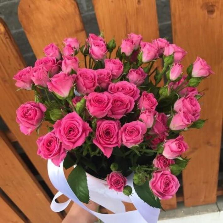 7 crimson shrub roses