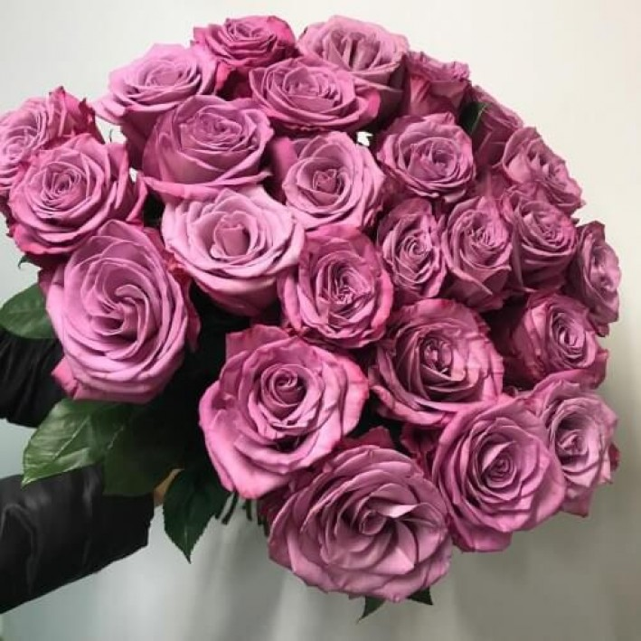 25 lilac roses