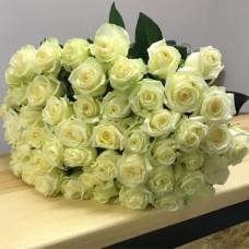 51 white rose